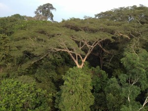 Über den Dächern des tropischen Regenwaldes