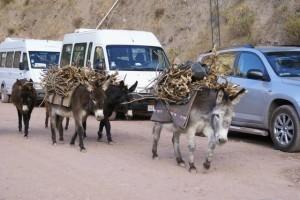 Peruaniusche Lasttiere