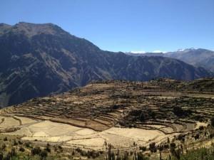 Tereassenfelder im Colca Canyon