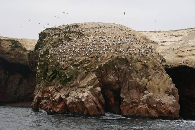 Vogelparadies Baleasters